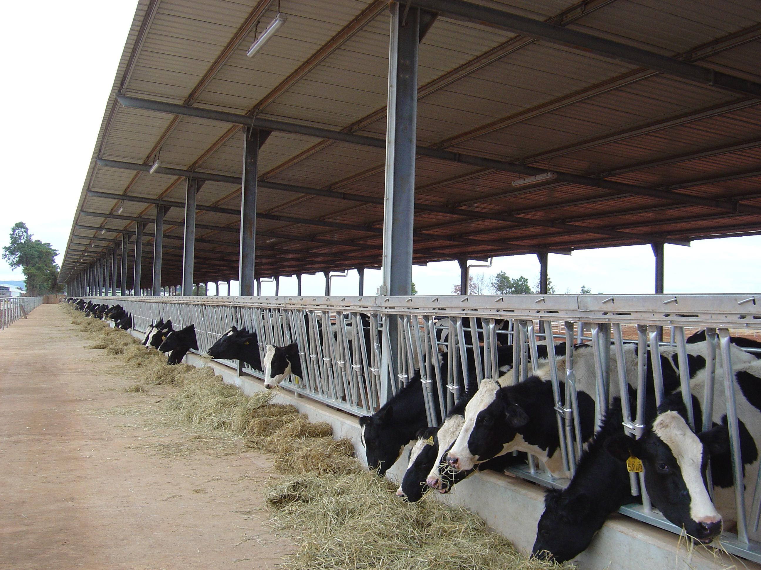 Animal sheds